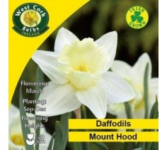 Daffodils Mount Hood 5 Bulbs