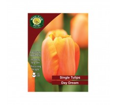 Tulip Darwin Hybrids Day Dream 10 Bulbs